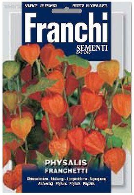 Физалис Franchetti (1 гр) DBF 342/50