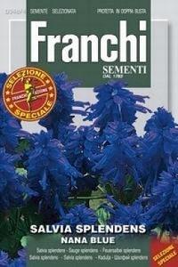 Сальвия блестящая карликовая, синяя  DBFS (0,3 гр) 348/4